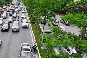 Năm 2018, Hà Nội trồng thêm hơn 380 nghìn cây xanh