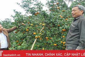 'Tiếp sức' để đặc sản cam bù Hương Sơn vươn xa