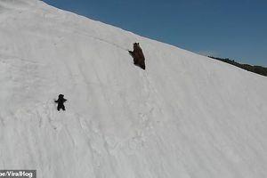Hành trình vượt núi tuyết của gấu con truyền động lực cho toàn nhân loại