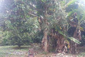 Chủ tịch xã tử vong trong tư thế treo cổ trên cây sau vườn nhà