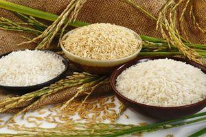 Hạt gạo Việt đã đăng ký bảo hộ toàn cầu