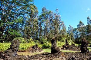 Bí ẩn khó tin về rừng cây nham thạch độc đáo nhất hành tinh
