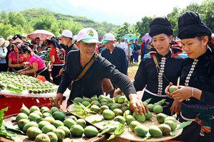 Để xây dựng thương hiệu quốc gia cho sản phẩm nông sản ở các tỉnh Tây Bắc