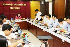 Sở Nông nghiệp và Phát triển nông thôn giảm 11 đầu mối sau sắp xếp tổ chức bộ máy