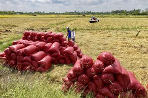 Xuất khẩu gạo trở lại mốc 6 triệu tấn