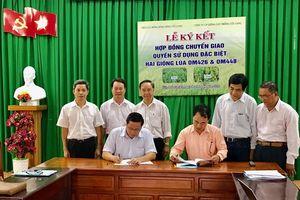 Viện lúa ĐBSCL: Thêm hai giống lúa OM426 và OM448 chuyển giao quyền sử dụng