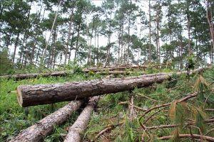 Lâm Đồng yêu cầu công bố đường dây nóng để kịp thời xử lý các vi phạm về rừng