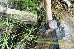 Vụ con bò ngã làm lộ bê tông cốt cây: Tiếp tục điều tra, xử lý nội bộ