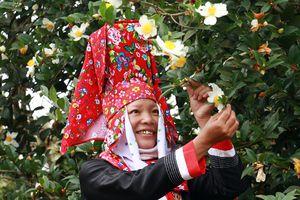 Quảng Ninh: Hội hoa sở Bình Liêu sẽ diễn ra từ ngày 7-9/12