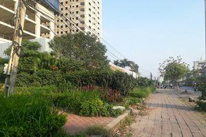 Dải cây cảnh ven đường hóa 'vườn hoang'