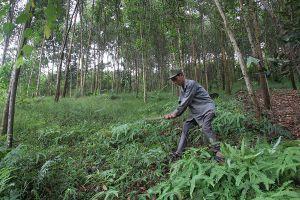 Chính sách chi trả dịch vụ môi trường tại Yên Bái: Giúp người dân gắn bó với rừng