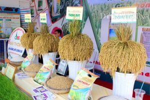 Công bố logo thương hiệu gạo Việt Nam vào tháng 12