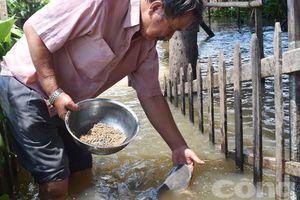 Lão nông có tài dụ cá làm thú cưng