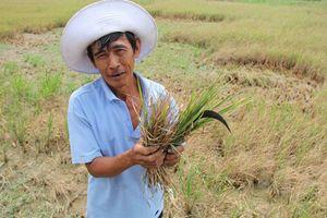 5 năm tái cơ cấu nông nghiệp: 'Đừng chỉ dựa vào ngành nông nghiệp'