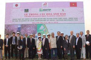 Trồng 150 gốc hoa anh đào tại khu CNC Hòa Lạc