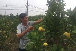 Người cựu chiến binh làm giàu từ trồng cây cảnh