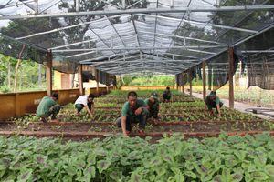 Hiệu quả từ phong trào đỡ đầu, kết nghĩa ở biên giới Đắk Lắk