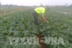 Bên lề Quốc hội: Tạo hành lang pháp lý cho tổ chức liên kết sản xuất nông nghiệp