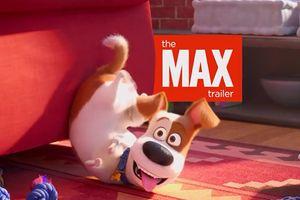 'Đẳng cấp thú cưng 2' tung trailer đầu tiên, chú chó Max khiếp sợ trước những căn bệnh lạ trong phòng khám thú y
