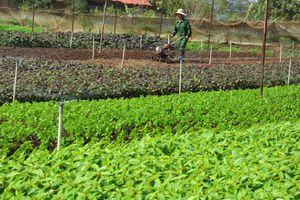 Hòa Bình: Giao dịch đất nông nghiệp gặp khó