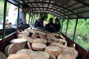 Điện Biên: Bắt giữ đối tượng vận chuyển 830 lóng gỗ nghiến dạng thớt