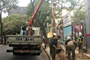 Hà Nội: Cây xanh bất ngờ đổ vào xe ô tô Camry đỗ ở phố Nhà Chung