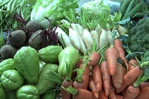 Có một khu chợ nông sản sạch của người trẻ