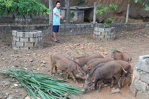 Lập nghiệp thành công nhờ đa dạng chăn nuôi trang trại gắn với các doanh nghiệp