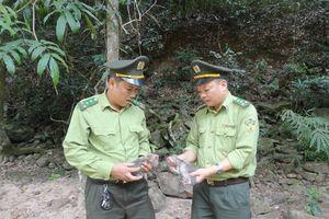Tái thả động vật rừng về tự nhiên