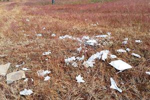 Trước ngày lễ hội, đồi cỏ hồng bị bôi bẩn bởi rác thải, kim tiêm