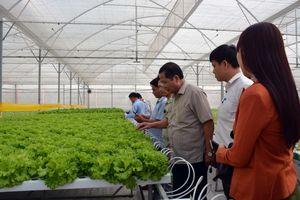 Sau 5 năm tái cơ cấu, ngành nông nghiệp đang bứt phá