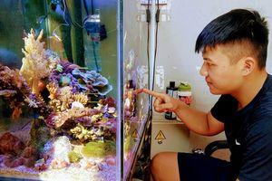 Thú chơi san hô cảnh, cá xăm mình của người trẻ