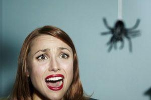 Phát hiện mới: Cách khắc phục nỗi sợ nhện và nhiều thứ khác