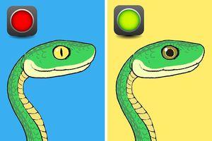 Bí kíp nhận diện rắn có độc hay không từ A - Z