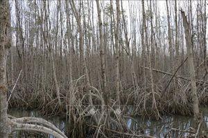 Bảo tồn và quản lý đất ngập nước - Bài 3: Những tác động bất lợi