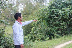 Sinh sống hơn 20 năm bỗng dưng mất đường đi ở Hà Tĩnh: Cần sự vào cuộc quyết liệt từ chính quyền