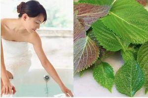 Thực hư tác dụng tắm trắng bằng lá tía tô, ngải cứu, chanh tươi