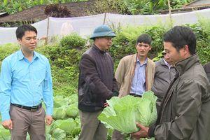 Tuyên Quang: Mô hình trồng rau an toàn tạo thu nhập ổn định cho nông dân Na Hang