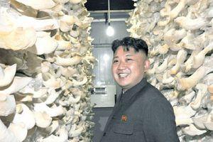 Hàn Quốc kiểm tra phóng xạ với 2 tấn nấm ông Kim Jong-un tặng