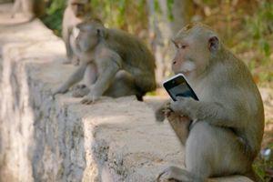 Khỉ cũng ma lanh