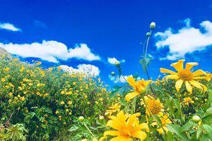 Mãn nhãn trên đỉnh Chư Đăng Ya mùa hoa dã quỳ
