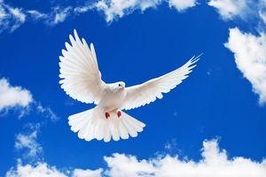 Bi kịch chiến tranh và khát vọng hòa bình