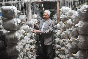 'Vua' nấm Ninh Bình áp dụng CNC vào sản xuất thu trăm tỷ từ nấm sạch