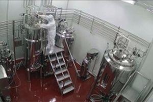 Sản xuất thành công vắc-xin phòng bệnh lở mồm long móng ở gia súc
