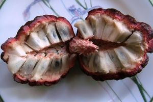 Độc lạ những loại quả màu tím gây sốt ở Việt Nam
