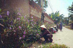 Nâng cao ý thức bảo vệ môi trường trong xây dựng các tuyến đường hoa