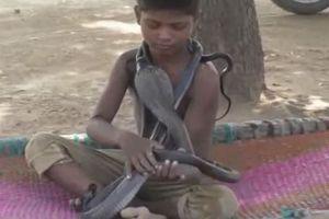 Cậu bé 7 tuổi ăn ngủ cùng những con rắn hổ mang kịch độc