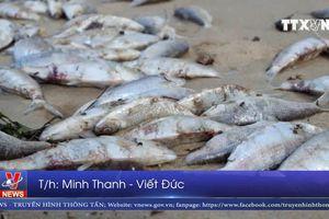 Cá chết dạt vào bờ biển Đà Nẵng
