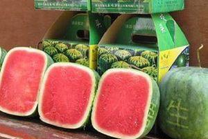 5 loại trái cây Nhật Bản đắt nhất thế giới có gì khác biệt?