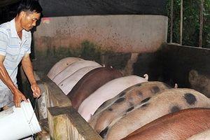 'Thủ phủ' chăn nuôi Đồng Nai e dè trước sức ép thịt giá rẻ nhập khẩu